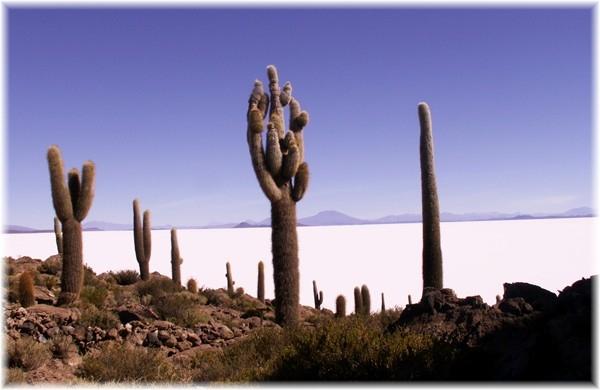 """... """"Kaktus-Insel"""" würde besser passen"""