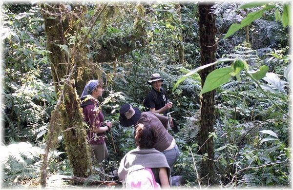 ... Frank, Michaela, Sonja und Heidi im Dschungel