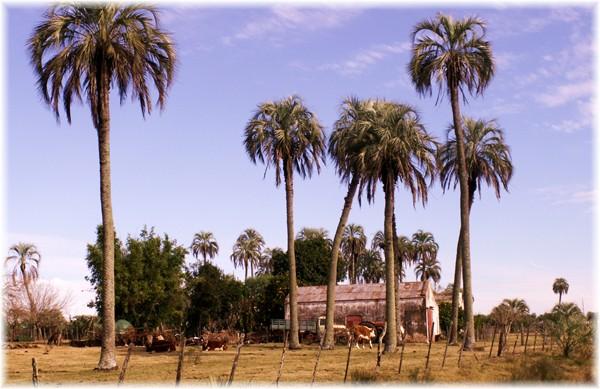 ... Bauernhof im Norden von Uruguay
